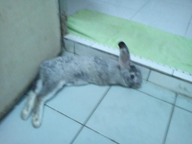 Trevor bunny