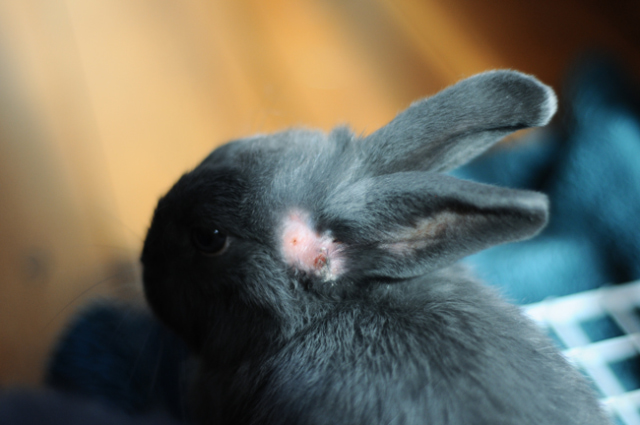Mina\'s ear.