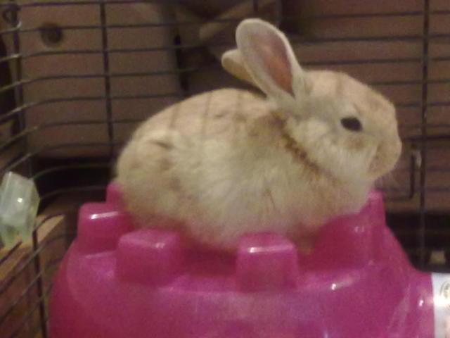 Squishy, Fluffy Bunny.