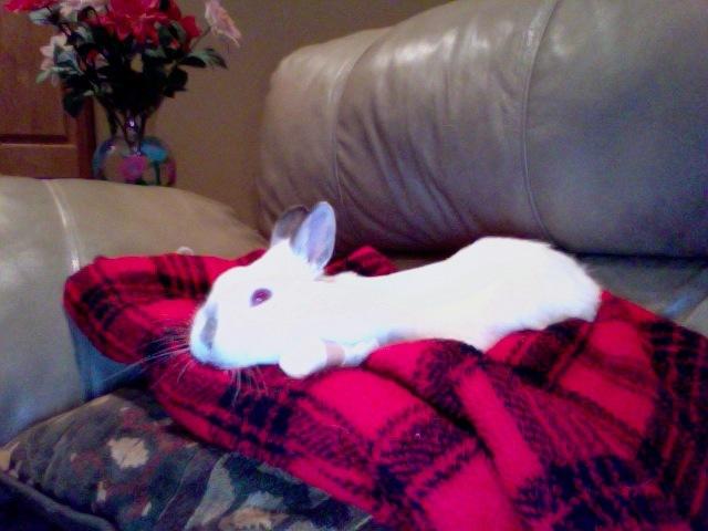 Snowball, the rabbit.