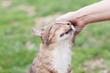 Cat rubbing