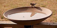 clay bird bath