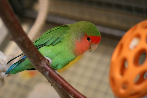 Decorate a bird cage with natural branch perches and toys for entertainment.