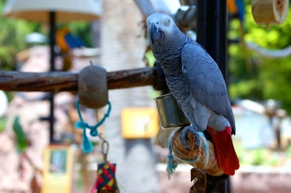 Keep your bird entertained with a variety of colorful toys.