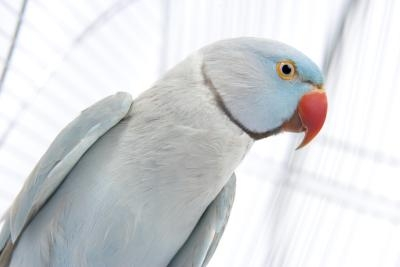 Mites can seriously weaken a bird and cause it to suffer from secondary infections.