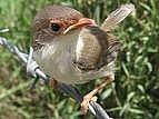 Make Squirrel Proof Bird Food Seed
