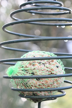 A ball of bird food suet.
